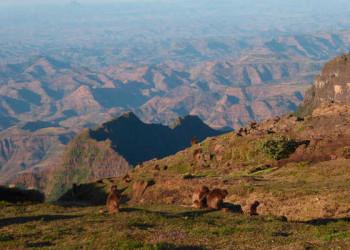 Dscheladas im Simien Mountains