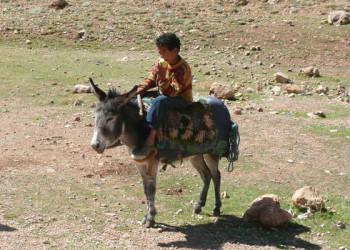 Esel mit Kind im Hohen Atlas