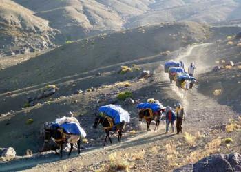 Gepäcktransport, mit den Eseln im Gebirge