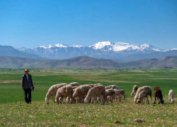 Atlasgebirge mit Schafherde