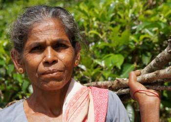 Einheimische Frau beim Holz sammeln