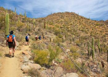 Wanderung im Saguaro NP