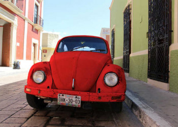 Käfer im Campeche