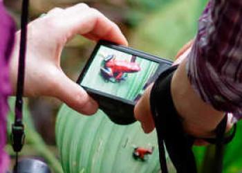 Fotografieren eines Erdbeerfrosches