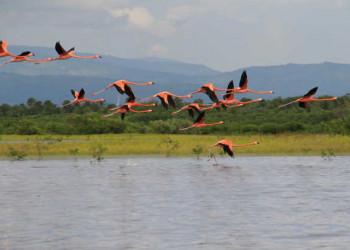 Flamingos über der Laguna de Oviedo
