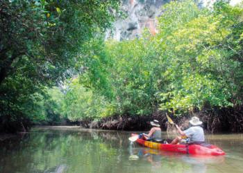 Kanuausflug durch Mangrovenwald