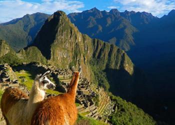 Machu Picchu mit Alpakas