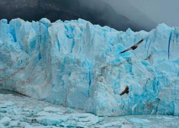 Condore am Perito Moreno