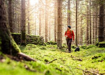 In den Wäldern von Breanäs