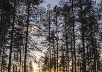 Metsäkartano