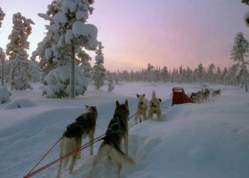 Mit den Huskys durch Lappland