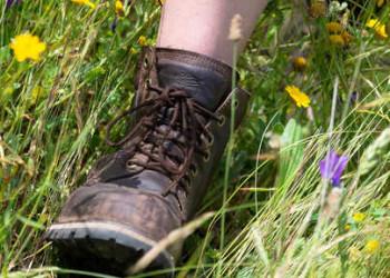 Wanderschuhe im Gras