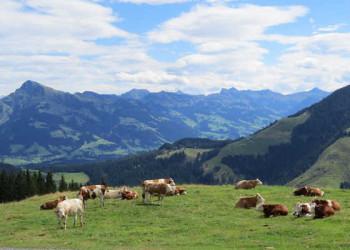 Blick vom Hartkaiser auf die Kitzbüheler Alpen