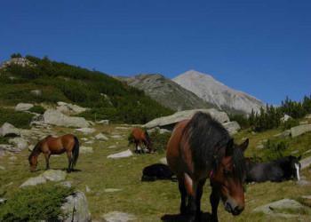 Wildpferde im Buderitza Tal