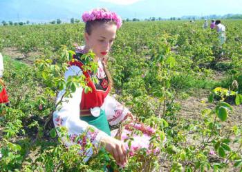 Rosenfestival im Rosental