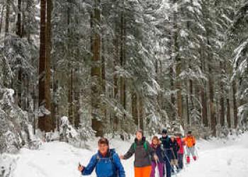 Schneeschuhwandern im verschneiten Wald