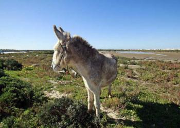 Esel in andalusischer Landschaft