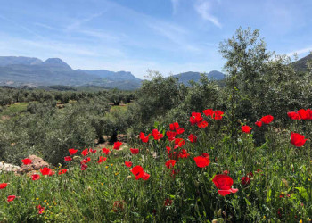 Naturpark Sierra Subbética