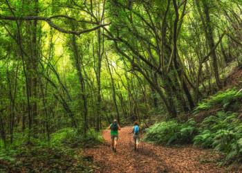 Wanderung im Lorbeerwald
