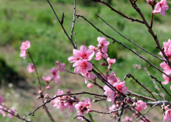 Blühende Pflanzenwelt