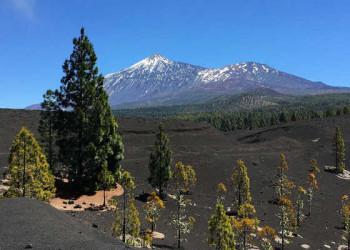 Durch die Vulkanlandschaft von Arenas Negras mit Blick auf den Teide