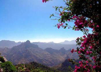 Blütenpracht in Artenara