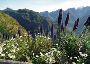 Madeiras ganzer Stolz