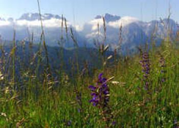 Panoramalandschaft Adamello