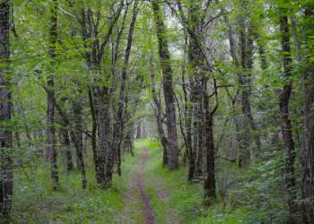 Im Trüffelwald bei Gabillou