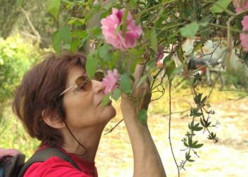 Mallorca Blüte Natur Genuß   © ASI