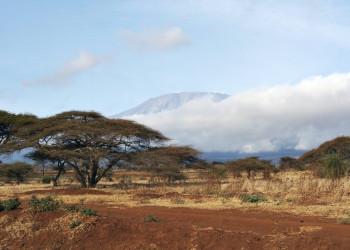 Amboseli NP Blick auf Kilimanjaro