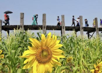 Die U-Bein-Brücke bei Mandalay in Myanmar