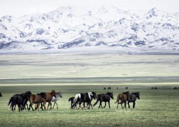 Die Mongolei ist auch das Land der Pferdeherden