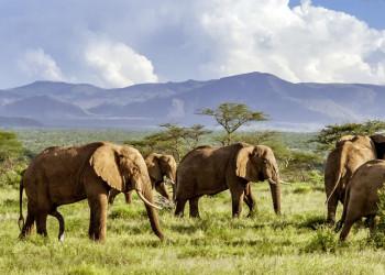 Impressionen vom Krüger-Nationalpark