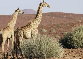 Irgendwo in den unwirtlichen Weiten Namibias