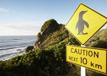 Eindeutig Südhalbkugel: Achtung Pinguine!