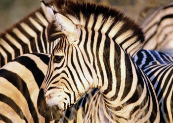 Auf Safari im Krüger Nationalpark