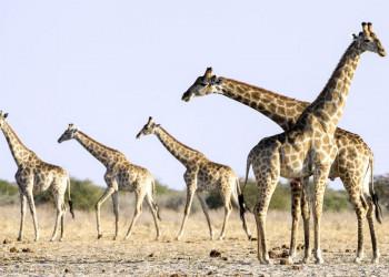 Auf Safari durch Namibia