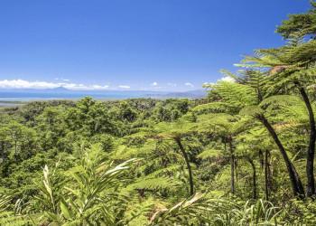 Regenwald-Feeling im Daintree-Nationalpark
