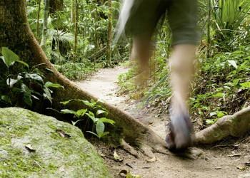Regenwald in Queensland