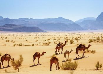Im Wadi Ram
