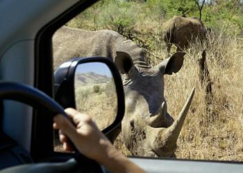 Safari im Pilanesberg Nationalpark- Setz mir keine Hörner auf!