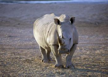 Auf Safari durch Südafrika
