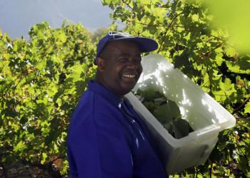 Das Boschendal-Weingut: Ein Gläschen in Ehren