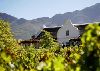 Südafrikanischer Wein, das Blut der Erde