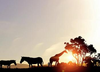 Postkartenmotiv vor dem eigenen Auge: Safari durch die Steppe Südafrikas