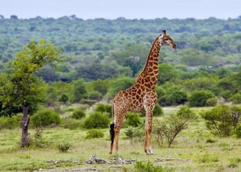 Safari in Südafrika: Kopf hoch- und Augen auf!