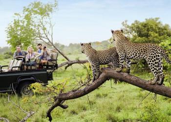 Auf Safari in Südafrika- Lieber nicht streicheln!