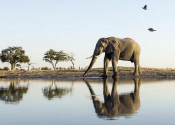 Auf Safari in Botswana- Überwältigende Schönheiten