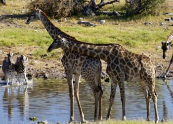Auf Safari im Etosha National Park